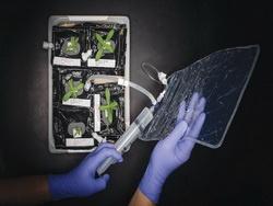 Космонавты перейдут на космические овощи