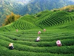 Китайский чай: 10 китайских чайных запретов