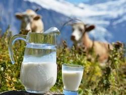 Когда нас лишили натурального молока