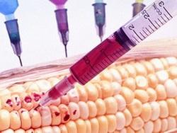 США начинает ГМО-войну против Европы