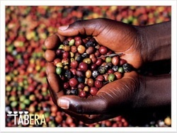 Кофе в зернах – виды и особенности