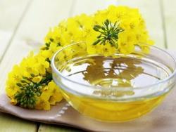 Рапсовое масло - полезные свойства