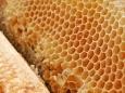 Гималайский галлюциногенный мёд