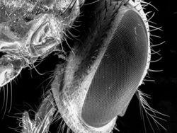 Пища, на которую садились мухи опасна для здоровья