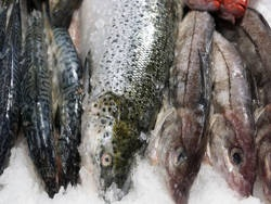 Ядовитая рыба в магазинах США и ЕС