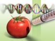 ГМО – оружие геноцида всего живого