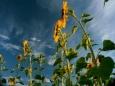 Названы самые токсичные продукты с огорода